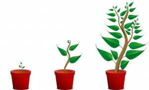 Solopreneurs have to both grow and maintain their business